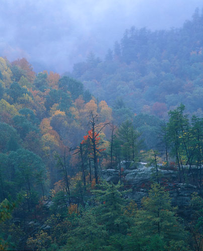 RRG3 - Fall0-Red River Gorge, Kentucky