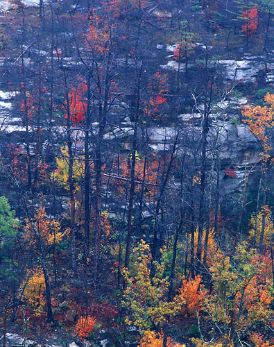 RRG4 - Fall-Red River Gorge, Kentucky