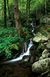 GSM2 Waterfall, Great Smoky Mountains