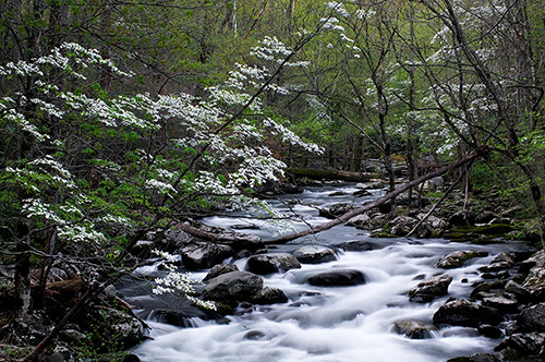 GSMNP1289 Middle Prong Little Pigeon River GSMNP TN
