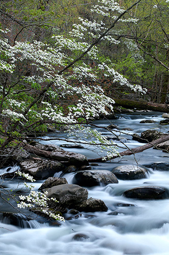 GSMNP1277 Middle Prong of Little Pigeon River GSMNP TN