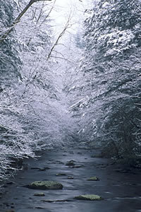 GSM2-2 Snow Scene, Great Smoky Mountains