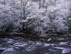 GSM2-4 Snow Scene, Great Smoky Mountains