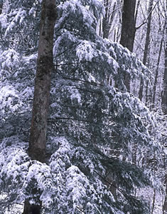 GSM2-5 Snow Scene, Great Smoky Mountains