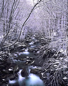 GS2-6 Snow Scene, Great Smoky Mountains