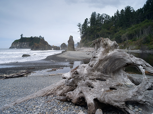 Second_Beach_Olympic_National_Park_WA