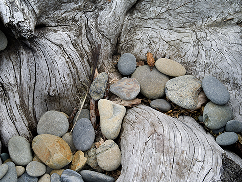 Beach_Peebles_&_Spruce_Stump_Second_Beach_Olympic_NP_WA